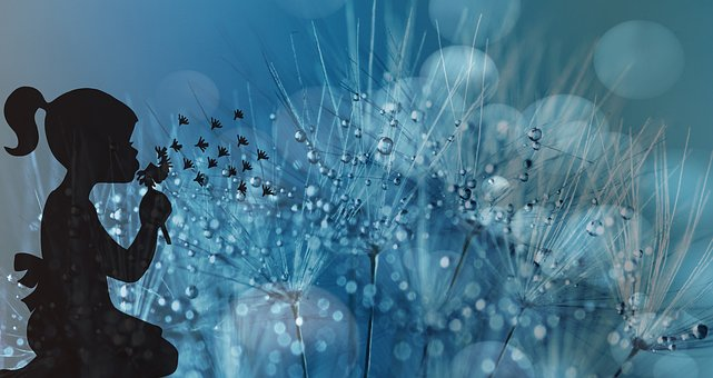 dandelion-1919084__340